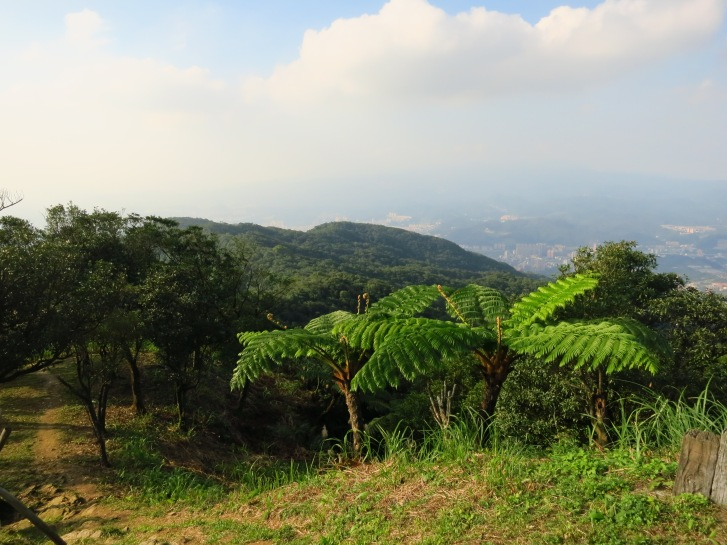 On Mount Sifenziwei