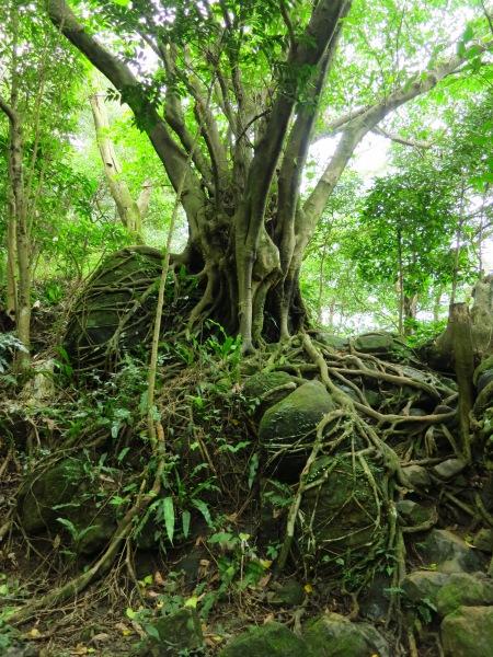 On the trail beyond Mount Shimen Neijian