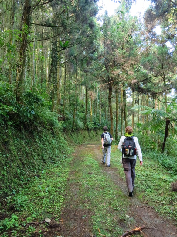 The peaceful Neidong Forest Road offers easy, scenic walking and a few great views