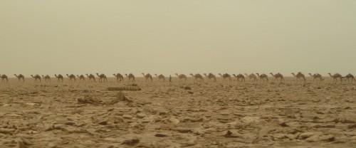 Camel caravan near Hamed Ela