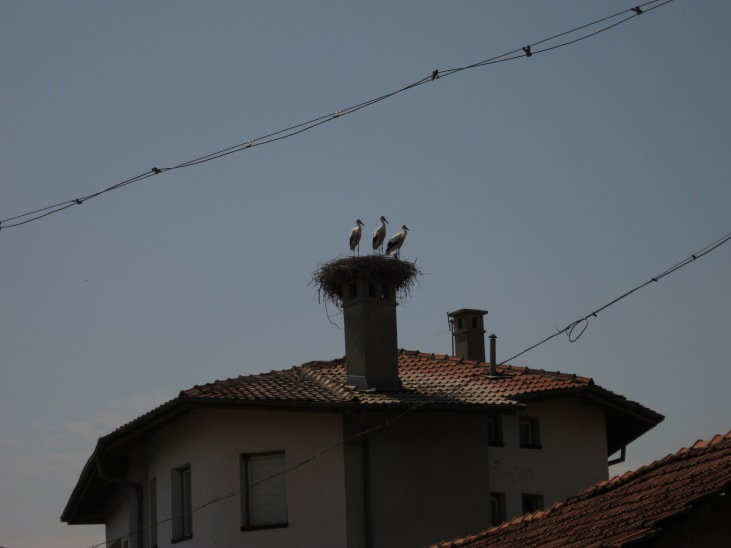 Storks nesting on the chimneys of buildings are another uniquely Balkan sight. The birds return to the same nest each year to rear their young.