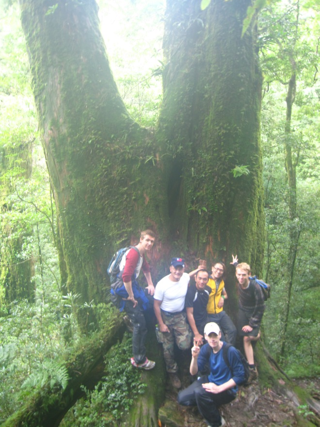 One of the un-named trees on the route
