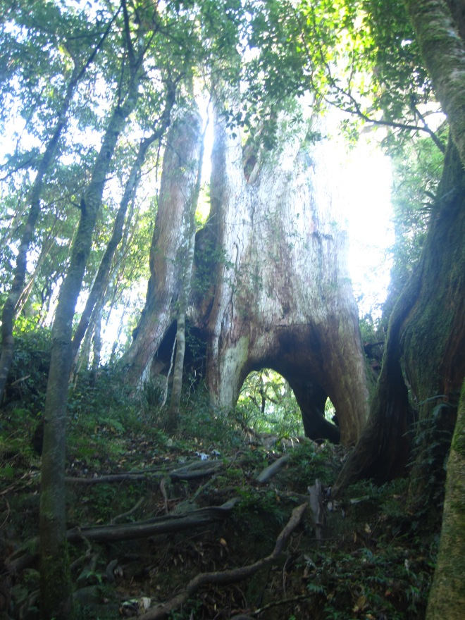 The Eight Immortals Tree, from below