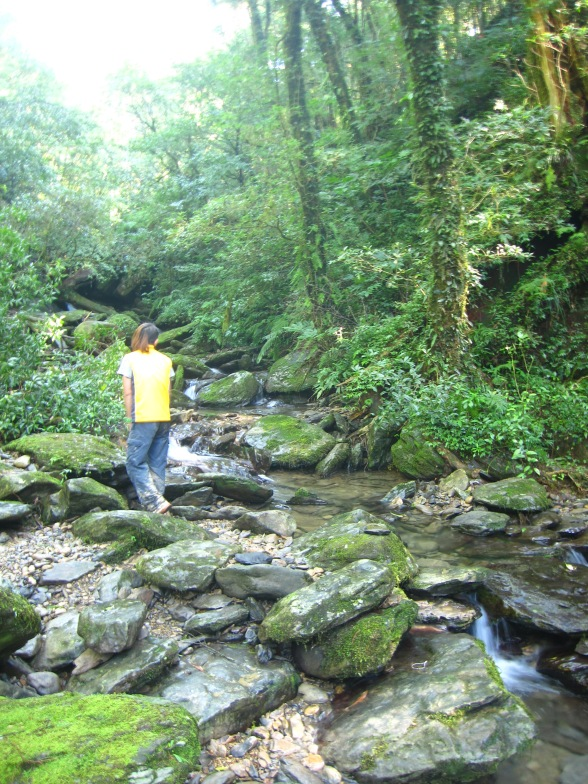 The Yunei Stream near Eight Immortals Tree