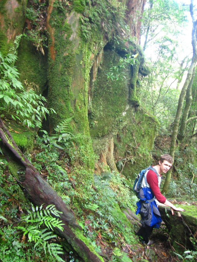 The trail to White Veil Falls passes a succession of fine old trees.