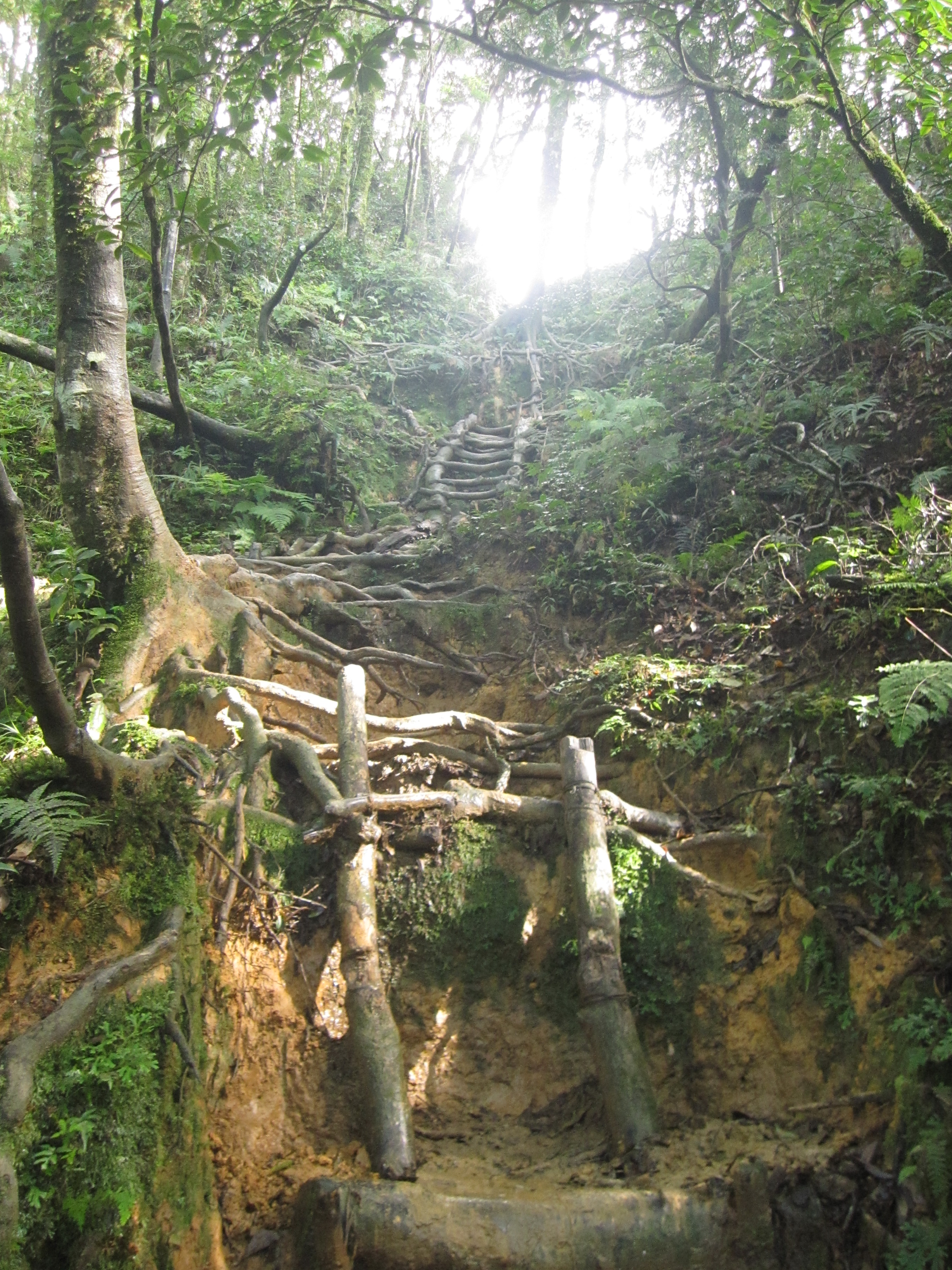 One of the many crude ladders on the final push to the summit of Mount Beichatian