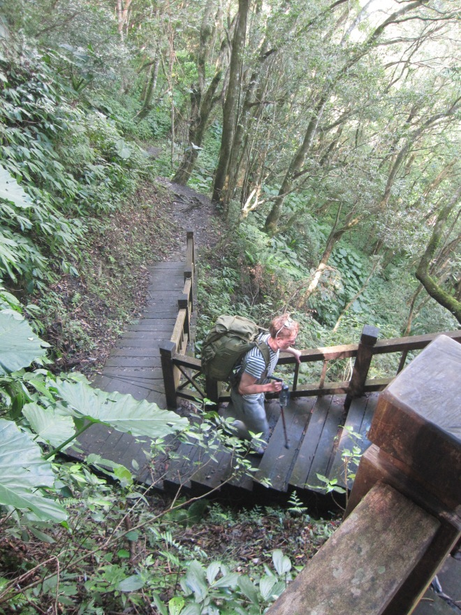 Nowadays the trails are almost too well-kept, with several stretches of raised boardwalk on the first section of the route.