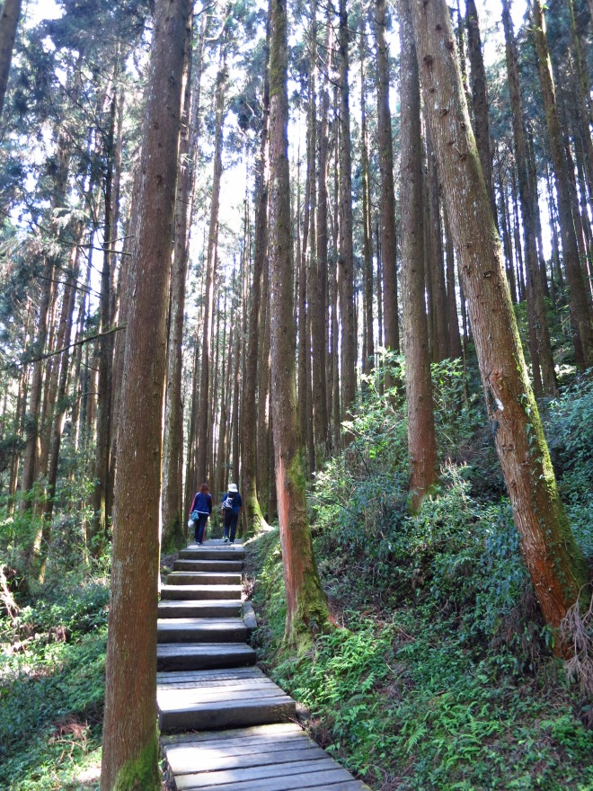 A quiet trail in SHanlinsi; the best places of the forest park are along the trails, away from the road, the bus, and the crowds, most of whom shuttle between the main sights along the road through the reserve