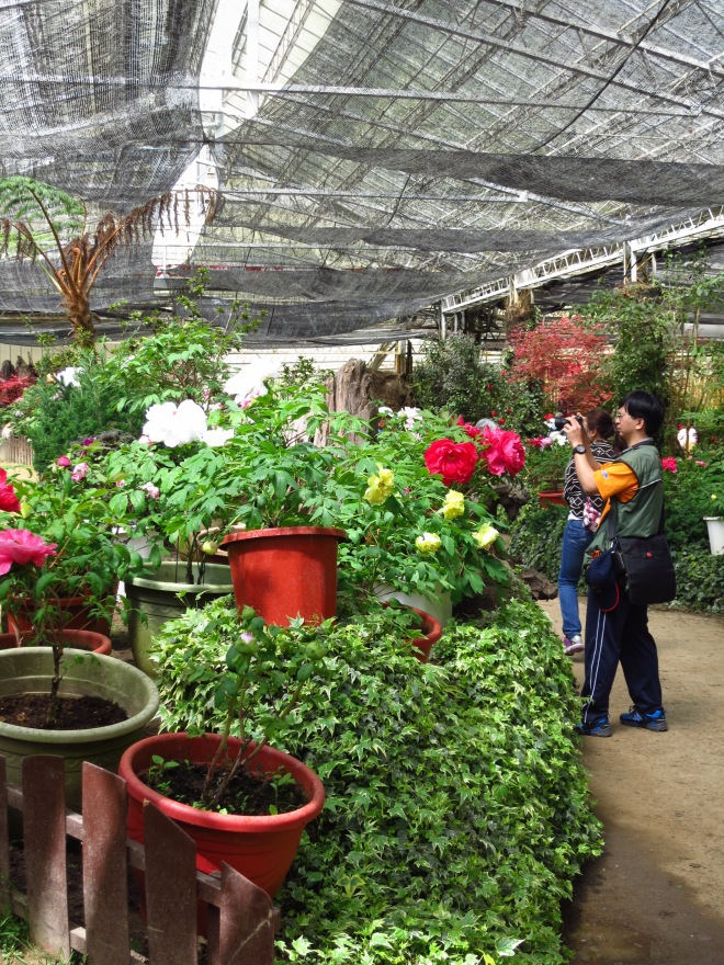 Most visitors to Shyanlinsi in the spring are here for the flower festival - peonies, azaleas and cherry blossom