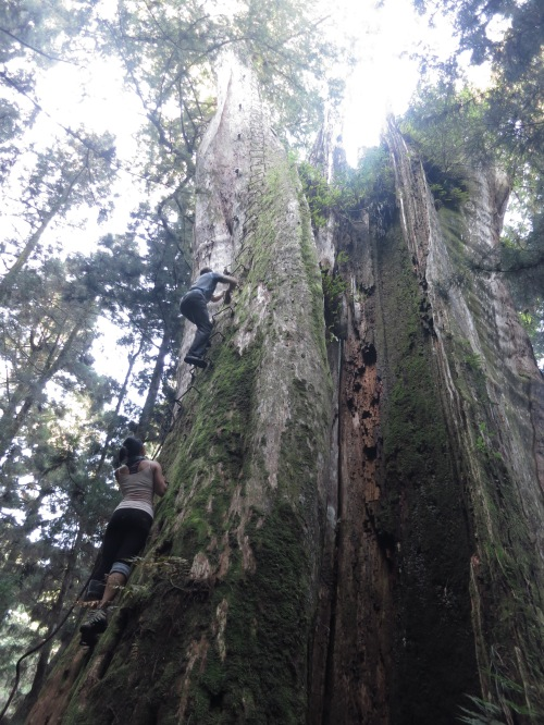 Mianyue Ancient Tree, an hour's walk beyond the lake