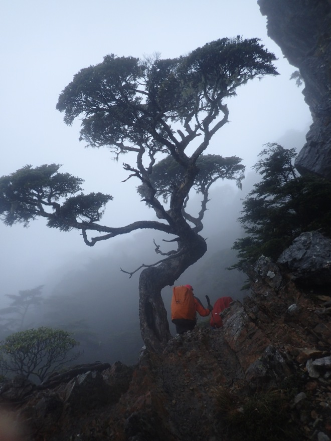 The famous Chiyou Tree, on the Wuling Four Mountains high mountain trek