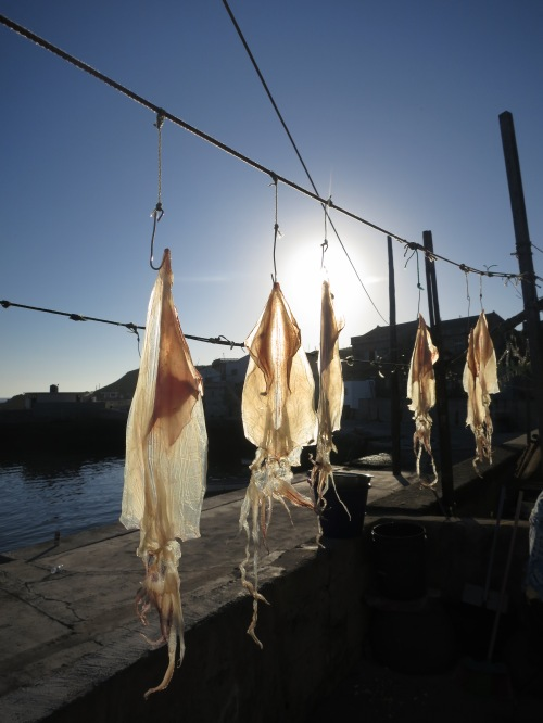 Drying fish on Hua Island, Penghu
