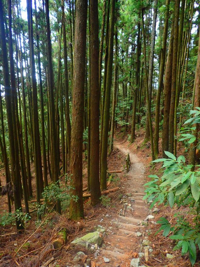 The trail up Mt. Maluan